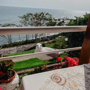 Výhľad z reštaurácie Kiparis (a čajka)