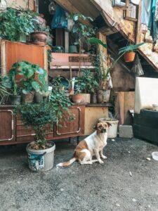 Tbilisi a pouličné psy